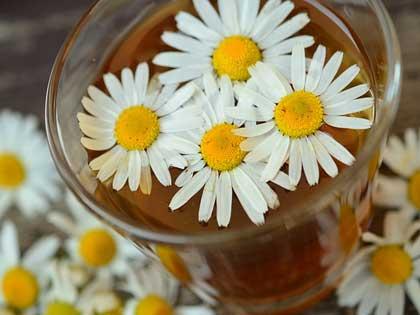 manzanilla hierbas medicinales